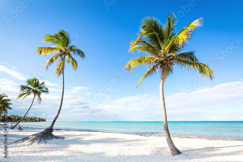 Foto auf Leinwand Palms Coconut palm trees an pristine bounty beach