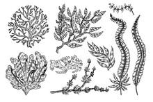 Hand Drawn Seaweed. Underwater...
