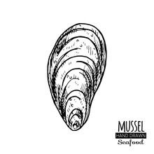 Hand Drawn Seashell. Monochrome Illustration Vintage Seafood. Oyster Sketch. Great For Fish And Sea Food Restaurant Menu, Flyer, Card, Business Promote.
