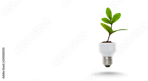 Photo  Light Bulb with sprout. Mixed media