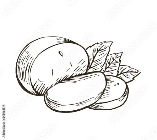 Fototapeta Cheese Buffalo mozzarella with basil leaves. Hand drawn engraving. Vector illustration. obraz