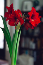 Bouquet Of Red Flowers In An I...