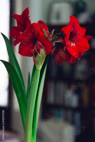Photo bouquet of red flowers in an interior