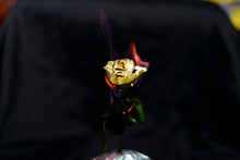 Flame On A Black Background. White Rose On Fire. Burning Rose Petals. Fiery Abstraction. Violet-orange Flame.
