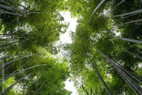 Recess Fitting Bamboo Low angle view image of bamboo forest in Arashiyama, Japan