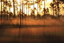 Backlit Fog At Sunrise In The Pinelands Of Everglades National Park, Florida