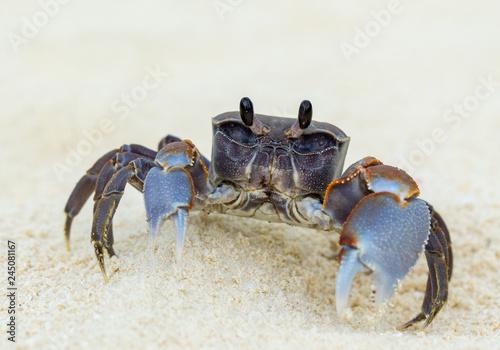 crab on tropical beach