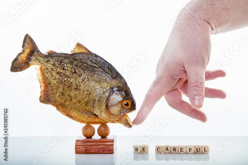 A piranha animal specimen with hand Canvas-taulu
