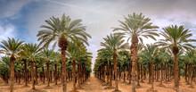 Panoramic Image With Plantatio...