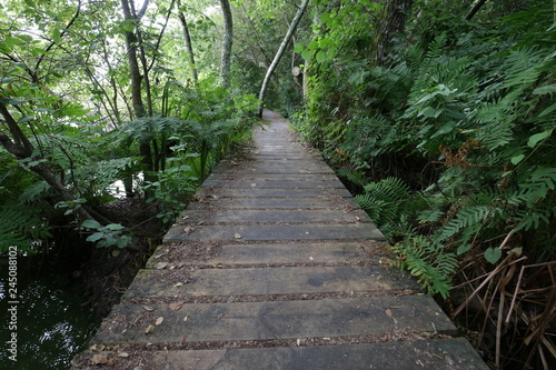 Foto op Canvas Weg in bos chemin bois
