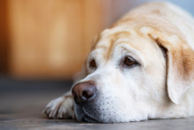 The Dog Looking Sad Waiting In Front Of The House. Straight Looking Face. Pets Concept. Empty Space For Text.