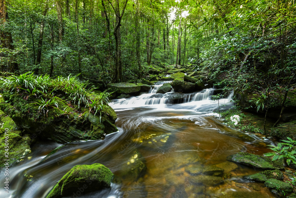 Mountain river stream waterfall green forest / Landscape nature plant tree rainforest jungle small waterfall