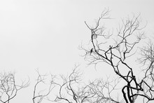 A Bird On Tree Branches On A White Background