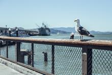 Bird Sitting On Barrier On Embankment Near Sea