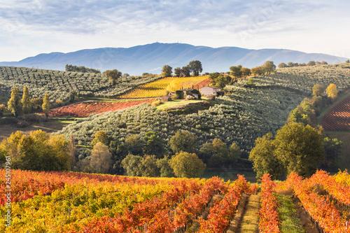 Montage in der Fensternische Landschaft Montefalco Wineyards, Perugia province, Umbria, Italy