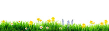 Grass And Spring Flowers Backg...