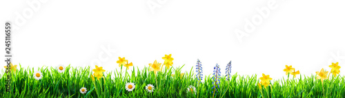 Photo sur Aluminium Marguerites grass and spring flowers background