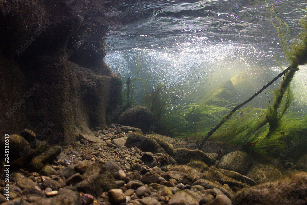 Fototapety, obrazy: Rocks underwater on riverbed with clear freshwater. River habitat. Underwater landscape. Mountain river. Litle stream with gravel. Underwater scenery, algae, mountain river cleanliness.