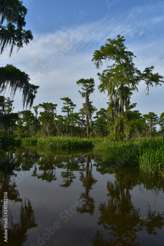 Photo Reflections of Trees in the Bayou on a Spring Day