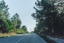 Road Among The Forest