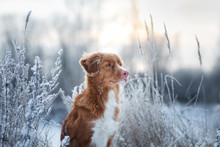 Portrait Of A Dog In The Snow....