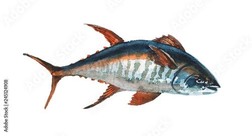 Watercolor hand-drawn wahoo / tuna