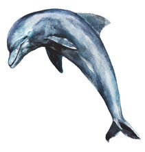 Watercolor Hand-drawn Dolphin ...