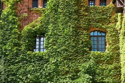 Fotografia Providing greenery
