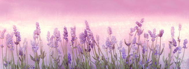 Lavendel, Panorama