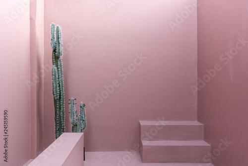Minimalna scena pustej przestrzeni z różową pomalowaną ścianą i małym krokiem i sztucznym kaktusem do sesji zdjęciowej w naturalnym świetle / scena studyjna / motyw różowo różowy / studio plenerowe / nowoczesny minimalistyczny styl