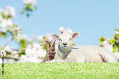 Fototapeta bunny and lamb on meadow in springtime