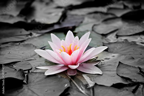 Photo Stands Water lilies water-lily