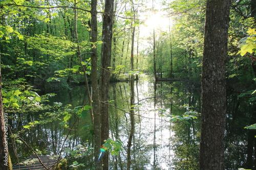 Fototapeta Teich im Wald obraz na płótnie