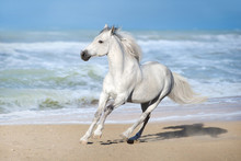 White Horse Run Gallop Along T...