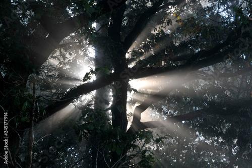 Fototapeta  soleil bois arbres rayons