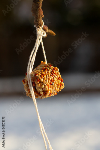 Fotografía  Winter suspended bird feeder: pressed cereal grains - feeding birds
