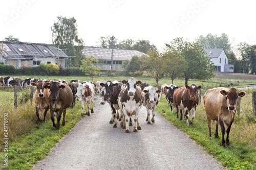 Foto Ferme agriculture vache bétail