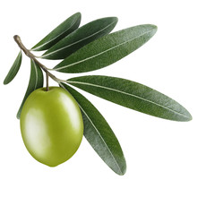 Single Green Olive With Leaves...