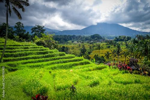 Deurstickers Asia land Jatiluwih paddy field rice terraces, Bali, Indonesia