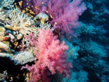 Fish Swimming In Colorful Cora...