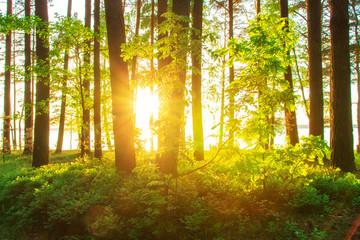 Sunshine in spring forest