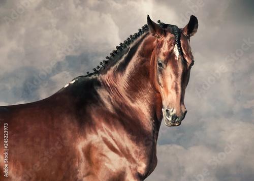 Fototapeta portrait of beautiful bay stallion agaist cloudy background obraz
