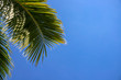 Leinwanddruck Bild - Coco palm leaf and clean blue sky landscape. Sunny tropical paradise banner template with text place.