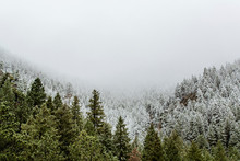 High Angle View Of Snow Covered Pine Trees Against Sky In Forest During Foggy Weather
