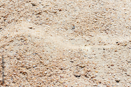 the texture of the sand with seashells for a summer background Wallpaper Mural