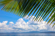 Coco palm leaf and turquoise blue sea water landscape. Green palm leaf frame on island view. Exotic place for vacation