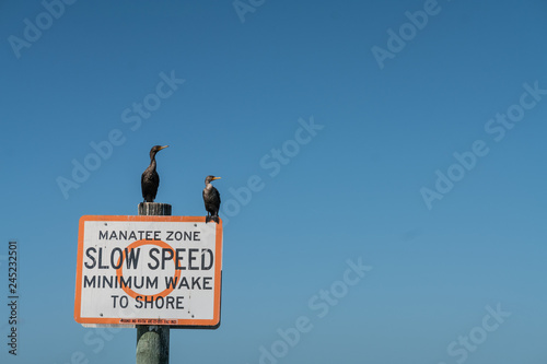 Manatee Zone - slow speed sign with tow cormorants sitting on top Wallpaper Mural