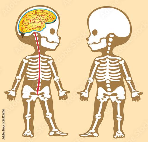 Cuadros en Lienzo anatomy