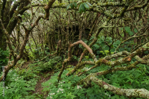 Twisted Trees in the Forest Canvas-taulu