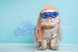 Leinwanddruck Bild - Very funny cat pilot of an airplane with glasses and a pilot's hat, against a background of clouds. A concept of funny and funny animals